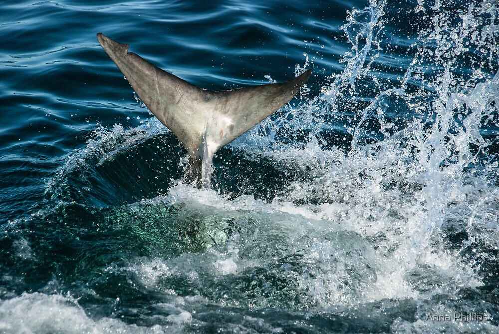 Shark tail by Anna Phillips