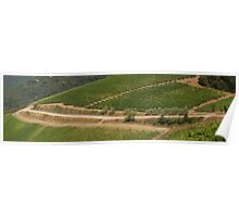 Road to the Winery, Tuscany, IT Poster