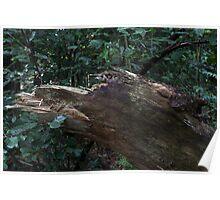 Bird Dog wood creature Poster