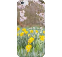 Cherry orchard and daffodils iPhone Case/Skin