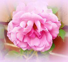 Paradise Pink Rose by EdsMum
