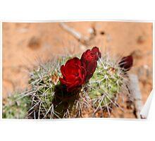 Red Cactus, Arizona, USA Poster