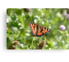 Tortoise shell butterfly, English Countryside. Metal Print