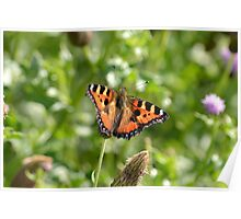 Tortoise shell butterfly, English Countryside. Poster
