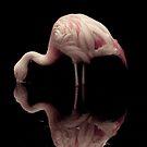 Flamingo by John Conway