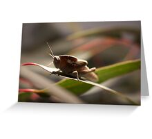 Toad Hopper Greeting Card