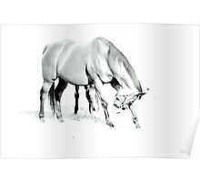 Horse A Poster
