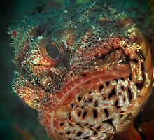 mr grumpy scorpionfish by peterbeaton