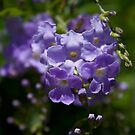 Purple Blossoms  by Margaret Stanton