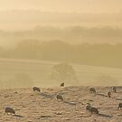 Dawn Light Misty Sheep by relayer51