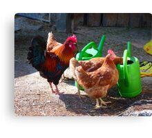Hens Chicken Hahn Gockel Poultry Pets Canvas Print