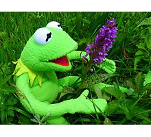 Orchid Getuepfeltes Frog Kermit Green Photographic Print