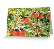 Imperial Crown Flower Yellow Orange Greeting Card