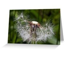 Spent Dandelion Greeting Card
