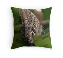 Owl Butterfly Brassolini Butterfly Throw Pillow