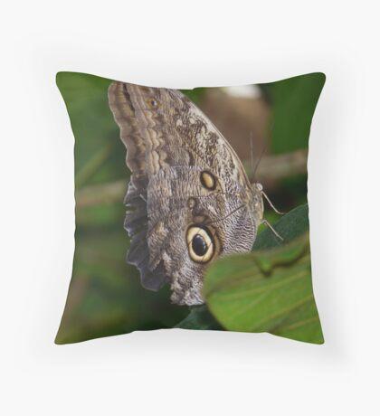 Owl Butterfly Brassolini Butterfly Throw Pillow
