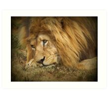 Rapt in Thought (Leo Panthera)  Art Print