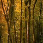 Seven Trees by Kelly Chiara