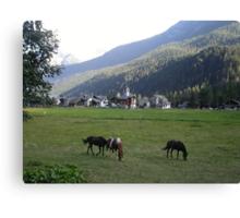 al pascolo... Monte Rosa 1800 metri - Piemonte - Italia - Europa--1500 visualizzaz maggio 2013-VETRINA RB EXPLORE 14 SETTEMBRE 2012 --- Canvas Print