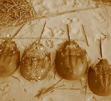 Limulus Polyphemus Line Up by M-EK