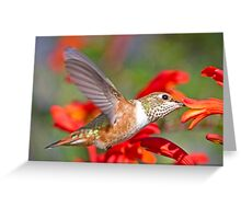Rufous Female Greeting Card