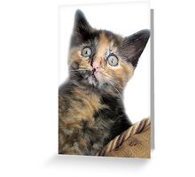 Welcome Home Baby! Greeting Card