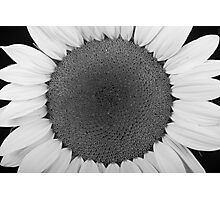 Sunflower Trance Photographic Print