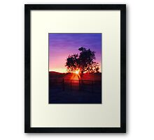 Sunset through tree Framed Print