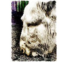 """One can't complain"" said Eeyore  Photographic Print"