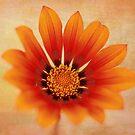 Orange Flower by TimeScape