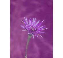 Color Me Purple! (Available in iPhone & iPod cases) Photographic Print