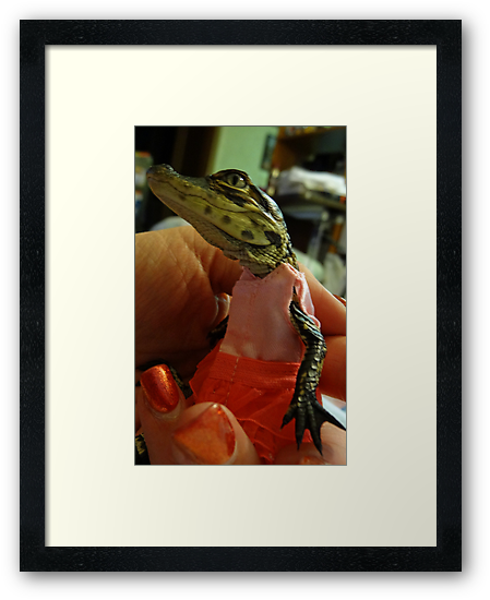 Meet My New Hatchling Lilly The Baby Alligator!!! by Angela Lance