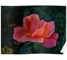 Rose sonnet Poster