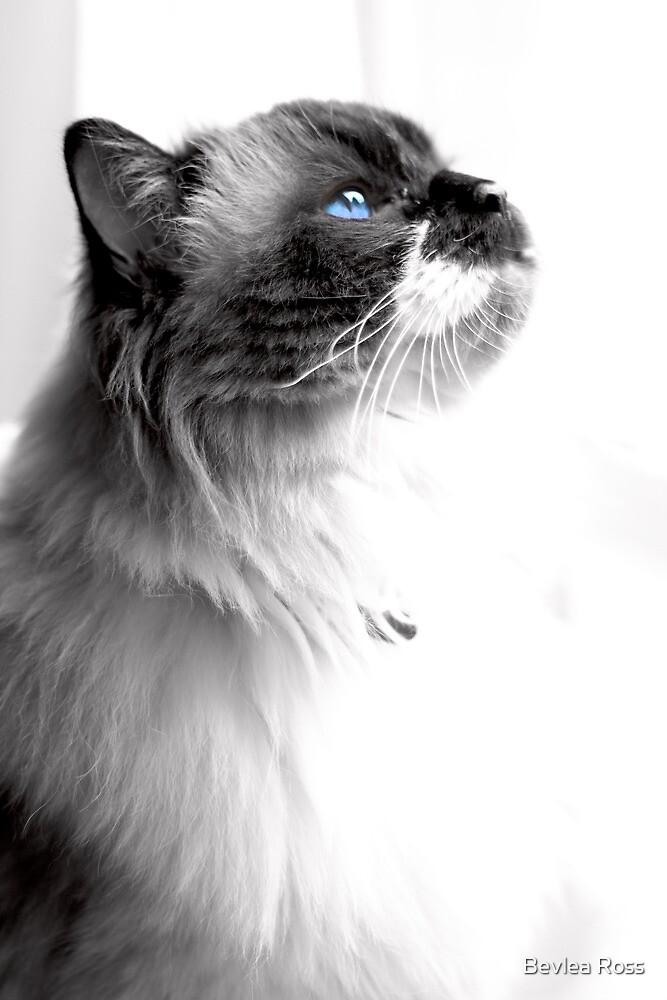 Ol' Blue Eyes by Bevlea Ross