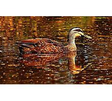 Two ducks Photographic Print