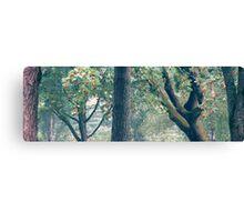 25.8.2012: Graveyard Trees Canvas Print