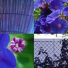 Purple details by Catherine Davis