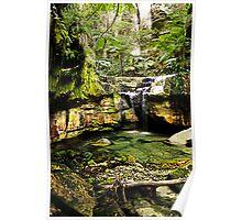 Moss Garden, Carnarvon Gorge, Queensland Poster
