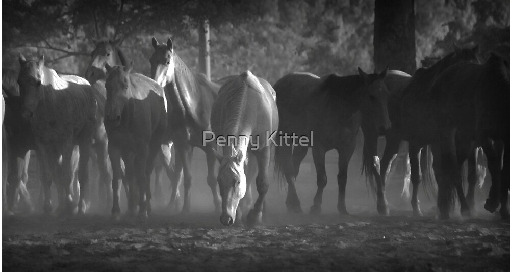Out of the dust by Penny Kittel