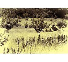 Grasping Nature Photographic Print