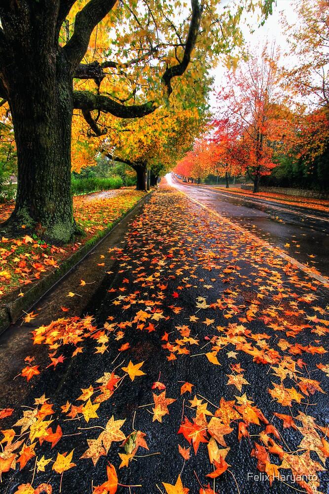 Autumn Rain by Felix Haryanto