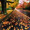 Autumn (Fall) Colours - (Canon EOS images only)