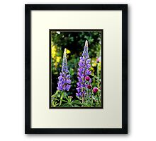 Lupines and Gerbera in the Garden Framed Print