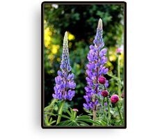 Lupines and Gerbera in the Garden Canvas Print