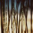 seashore sheoak II by © Karin  Taylor