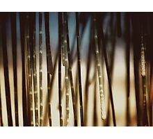 seashore sheoak II Photographic Print