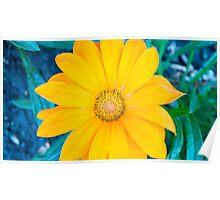 Pretty Flower Poster