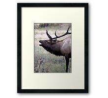 Elk Bugle Framed Print