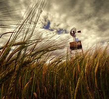 The Barley and the Pump by Rob Hawkins