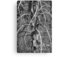 Dead Fir Tree 2 Canvas Print